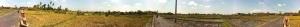 Rice Field Panorama